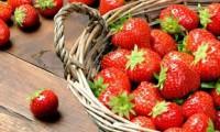 Fizyczna praca w Anglii bez języka przy zbiorach owoców na plantacji