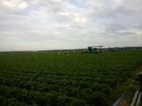 Fizyczna praca w Niemczech przy zbiorach jagód od lipca 2014