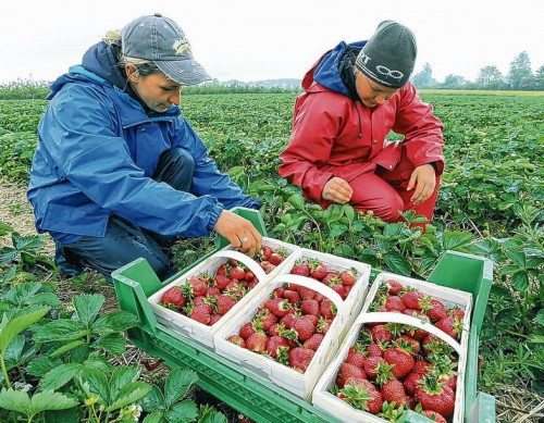 praca w rolnictwie norwegia