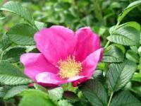 Dam pracę w Wielkiej Brytanii przy zbiorach kwiatów dla Polaków