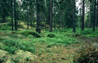 Praca w Danii przy sadzeniu drzew bez języka Hovedstaden