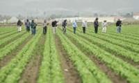 Niemcy praca bez znajomości języka przy zbiorach warzyw na sezon 2014