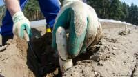 Niemcy praca – zbiory przy szparagach od zaraz w Duisburg dla par na 3 miesięce