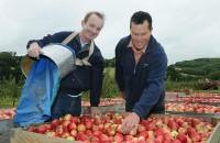 Fizyczna praca Holandia od zaraz na produkcji przy pakowaniu owoców, warzyw