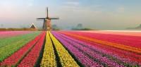 Fizyczna praca w Holandii od zaraz na wakacje 2014 w Roosendaal
