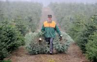 Dania praca dla studentów bez znajomości języka przy sadzeniu drzewek