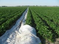 Oferta pracy w Niemczech przy zbiorach truskawek bez znajomości języka Lipsk
