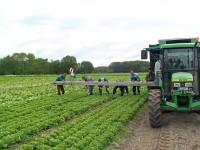 Od zaraz praca Anglia na farmie przy zbiorach warzyw bez języka Hereford