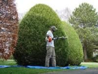 Niemcy praca bez języka w ogrodnictwie dla studentów od zaraz Rostock
