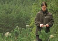 Fizyczna praca Francja bez znajomości języka przy pielęgnacji lasu