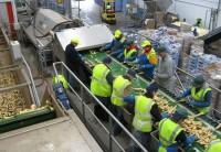Praca w Szwecji bez języka na produkcji przy pakowaniu warzyw Göteborg