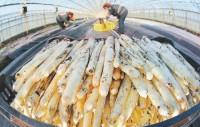 Niemcy praca w Hannoverze bez języka przy zbiorach warzyw/szparagów 2015