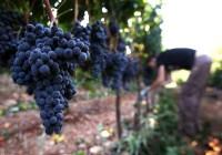 Od zaraz praca Niemcy w ogrodnictwie bez języka przy pielęgnacji winogron Norymberga