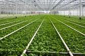 Holandia Praca w ogrodnictwie dla kobiet od zaraz w Klazienaveen