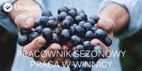 Francja praca w rolnictwie – pracownik sezonowy w winnicy 2015