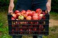 Bez języka praca w Niemczech przy zbiorach owoców Norymberga