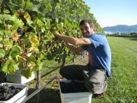 Bez doświadczenia sezonowa praca Anglia przy zbiorach winogron Alfriston