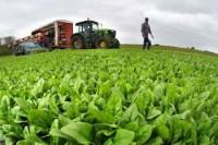 Niemcy praca w Lipsku dla par przy zbiorach warzyw od zaraz bez języka