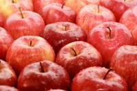 Oferta pracy w Niemczech przy zbiorach jabłek bez znajomości języka 2015