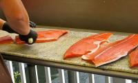 Oferta fizycznej pracy w Danii na produkcji ryb bez znajomości języka