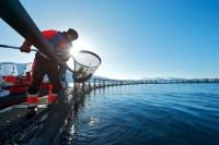 Fizyczna praca w Norwegii na farmie rybnej bez języka od marca 2016 Horten