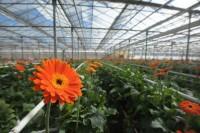 Niemcy praca sezonowa w ogrodnictwie przy kwiatach od zaraz bez języka Drezno