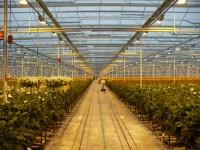 Oferta sezonowej pracy w Anglii przy zbiorach kwiatów bez znajomości języka Newquay