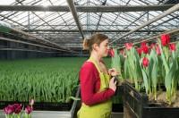 Ogrodnictwo dam pracę w Holandii dla studentów przy kwiatach bez języka Venlo