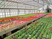 Holandia praca w ogrodnictwie od zaraz przy kwiatach bez języka Haga