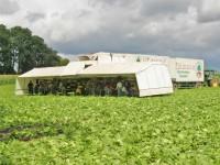 Niemcy praca sezonowa w rolnictwie zbiory warzyw bez języka Cappeln 2016