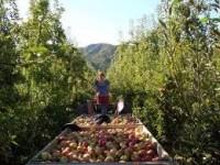 Dam sezonową pracę w Anglii bez języka zbiory owoców i warzyw od zaraz Hereford