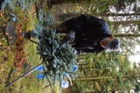 Sezonowa praca w Danii w leśnictwie – jesień 2016 Jutlandia