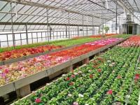 Oferta sezonowej pracy w Niemczech ogrodnictwo szklarnia od zaraz Ellwangen
