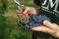 Praca w Niemczech przy zbiorach owoców Koblencja od zaraz bez języka