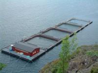 Oferta fizycznej pracy w Norwegii na farmie ryb od zaraz bez języka Horten