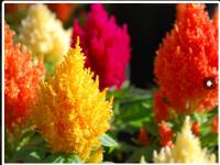 Ogrodnictwo sezonowa praca w Anglii przy kwiatach, Liverpool – Program Concordia.