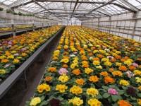 Ogłoszenie pracy w Niemczech od zaraz ogrodnictwo bez języka przy kwiatach Berlin 2017