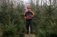 Leśnictwo, ogłoszenie pracy w Norwegii wakacje 2017 Tromsø bez języka