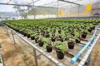 Dam sezonową pracę w Szwecji, szkółka roślin szklarniowych z Västerås Luty 2017