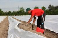 Praca w Niemczech od marca 2017 zbiory szparagów bez znajomości języka Warendorf