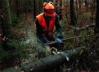 Pracownik leśny praca w Danii przy cięciu gałęzi na wysięgniku do 25 metrów