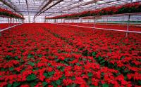 Norwegia praca w ogrodnictwie od zaraz przy kwiatach bez znajomości języka Hamar