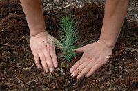 Leśnictwo – sezonowa praca w Szwecji przy sadzeniu lasu 2018