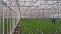 Od zaraz praca Dania w ogrodnictwie bez znajomości języka Odense sadzenie rzeżuchy