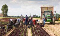 Od kwietnia 2020 Dania praca w rolnictwie bez znajomości języka Græsted