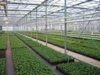 Od zaraz Niemcy praca w ogrodnictwie przy sadzonkach bez języka w szklarni Gensingen