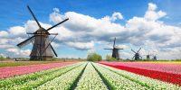 Ogrodnictwo dla par praca Holandia bez języka od zaraz przy kwiatach 2019 Westland
