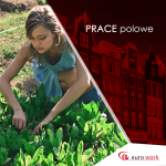 Zbiór kwiatów (lilie, piwonie) – Holandia praca sezonowa w polu 2019 Groningen