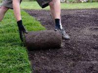 Od zaraz Szwecja praca przy sadzeniu roślin dla ogrodnika bez języka Orebro