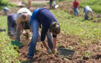 Od zaraz sezonowa praca Norwegia pomocnik w rolnictwie bez znajomości języka Moss 2019